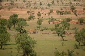 reforestation Mon Arbre Ma Tribu